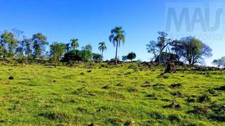 Chácara Para Venda Em Santo Antônio Da Patrulha, Catanduva - Ivsc1005