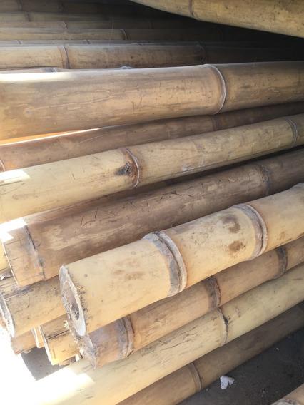 Bambu Guadua Angustifolia, 3-3 ½ Diam, 3m Largo