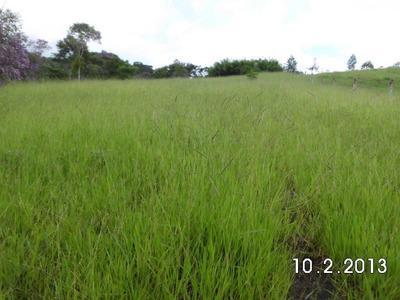 Vendo Troco Fazenda 90 Hectares Em Natividade Da Serra(4160)