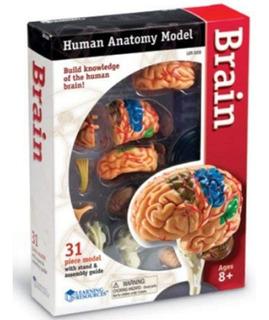 Anatomia Cerebro Humano Juego Educativo Niños Cientificos