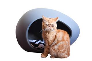 Cucha Cama Para Gato - Eggys Tamaño Pequeña! Puro Diseño