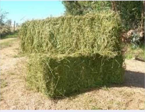 Fardos De Alfalfa Pura 100%