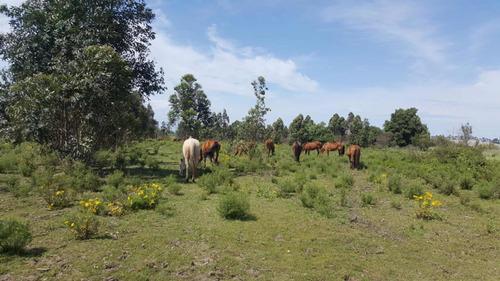 Imagen 1 de 12 de Chacra 10 Ha En El Pinar