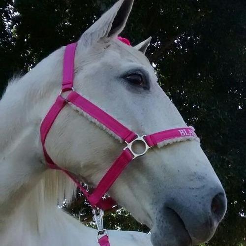 Cabresto Luxo Personalizado Com Nome Do Seu Cavalo