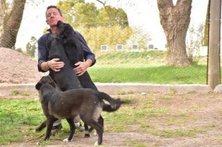 Cachorras 9 Meses Adopcion Gratis Mascotas (voluntad)