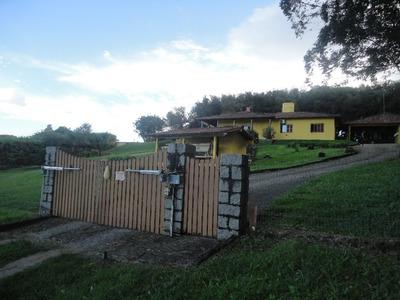 Sítio Em Vila Elsa Com 3 Dormitórios - Cs36006550