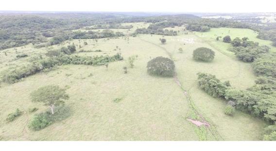Fazenda Tocantins