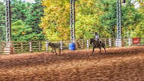 Cavalo Crioulo 4 Anos Puro, Muito Bom De Laço !