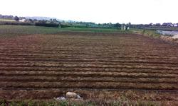 2.2 Manzanas Orilla Interamericana Patzicia Chimaltgo. Plana