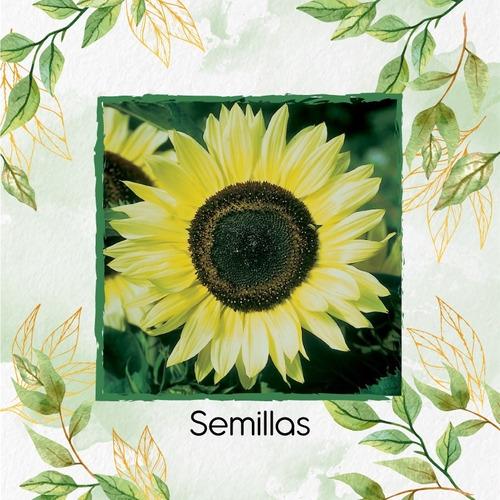 20 Semillas Flor Girasol Monshine + Obsequio Germinación