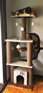 Rascadores Gimnasio Para Gatos (eden Gatuno) Torre C/ Hamaca