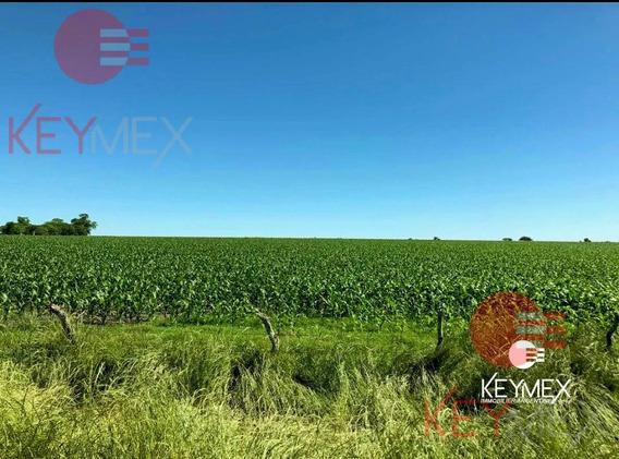 Campo - Chacra - Estancia - Gualeguay - Entre Ríos