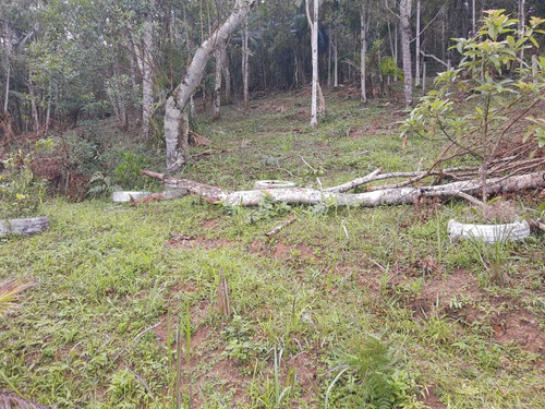 Imagem 1 de 14 de Chácara 4.000 M² / Plantações E Árvores Frutiferas / 4 Km Br