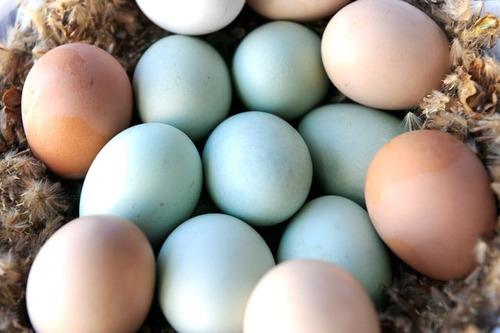 Imagen 1 de 3 de Huevos Fértiles De Gallinas De Campo El Precio Es Por Unid.