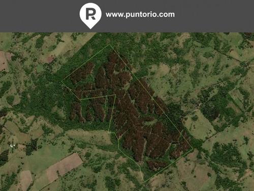Punto Río | 84 Hectáreas En La Zona De Don Carlos