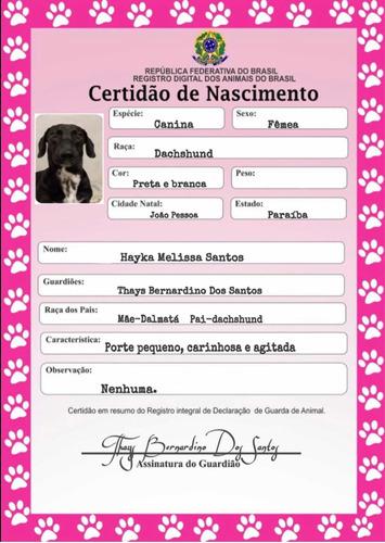 Imagem 1 de 5 de Certidão De Nascimento Pet E Rg Pet