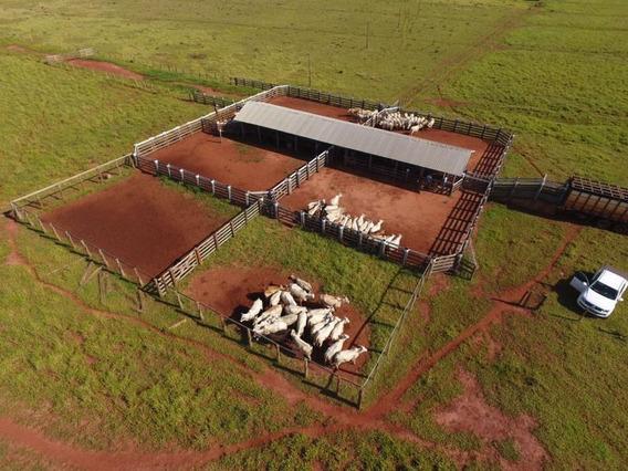 Fazenda Para Venda Em Campo Grande, Centro - 1102