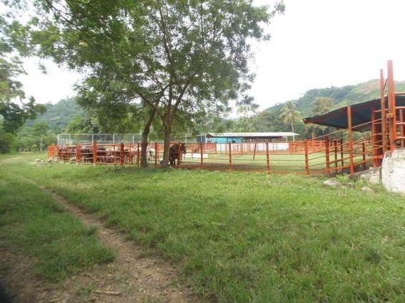 Finca Hacienda En Venta En Yaracuy #20-3176