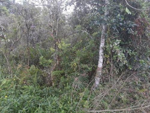 Terreno No Litoral Com 260 M², Em Itanhaém/sp 6274-pc