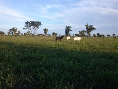 Fazenda Em Miranorte - To, Dupla Aptidão - 183