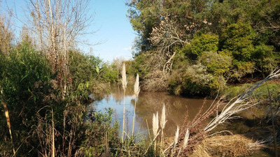 Campo 28 Has, Forestado, Con Arroyo, Paisaje, Cerca Del Mar