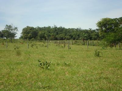 Fazenda A Venda Em Terenos - Ms (pecuária) - 1031
