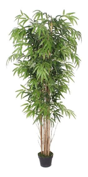 Planta Bambu Caule Natural 180cm 1530 Folhas Frete Grátis