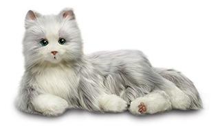 Entretenimiento Para Todos Los Gatos B7594 1
