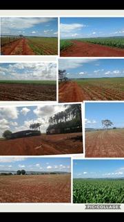 Excelente Fazenda 100% Aproveitável