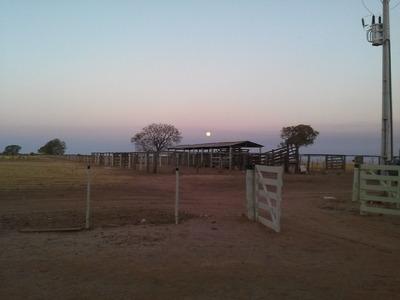 Fazenda Na Bahia, Pronta Para Soja
