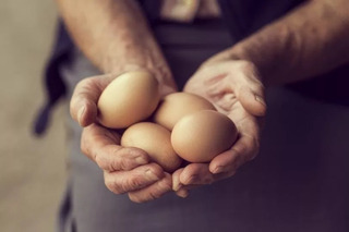 Huevos De Campo Colorados
