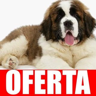 Entrena A Tu Perro San Bernardo Completa Actualizada !