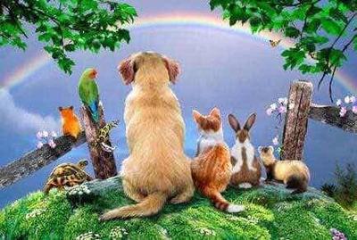 Cremación De Mascotas Eutanasia Wapp O Llamado 24 Hs