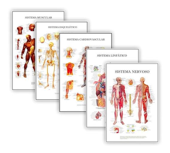 Kit 5 Posteres Educação Física, Anatomia Humana Bio 40x60 Cm