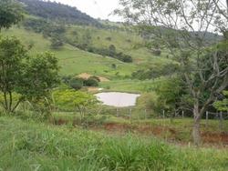 Venda Fazenda Telêmaco Borba Brasil - 4092