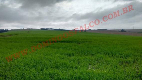 Venda - Fazenda - Zona Rural - Alta Floresta - Mt - D0129