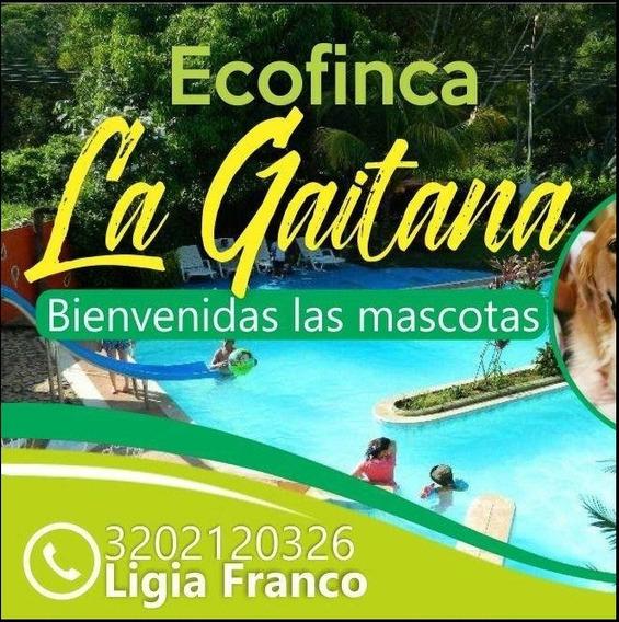 Alquiler De Casa Quinta Con Piscina Privada En Melgar Tolima