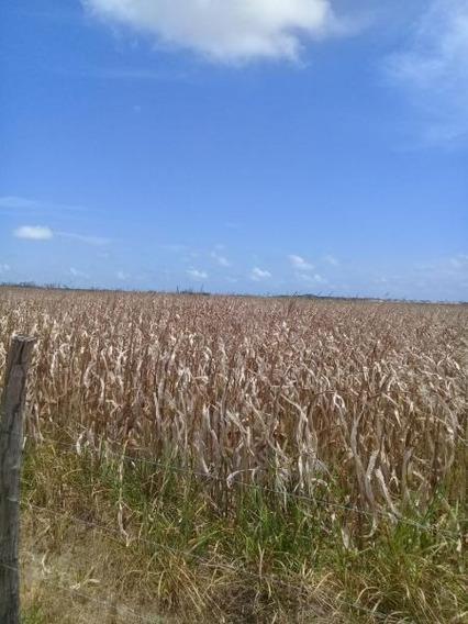 Fazenda Para Venda Em Pilar, Zona Rural - Fz -084_1-1287741