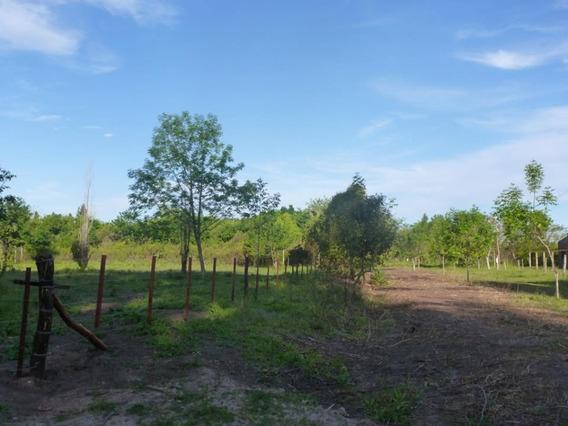 Importante Lote Zona De Quintas