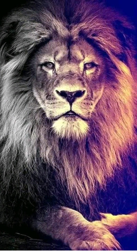 Imagem 1 de 1 de Quadro Leão
