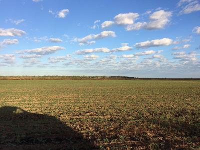 Fazenda De 900 Hectares Irrigada No Tocantins