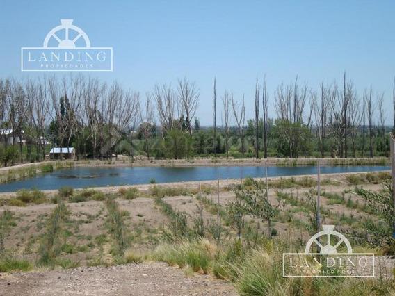 Campo En Venta - Finca Productiva En Mendoza