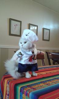 Disfraces Para Gatos Y Perros Pequeños