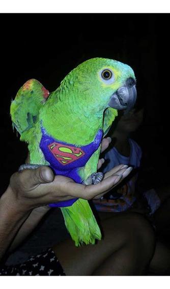 Fralda Papagaio Comum Ou Pombo