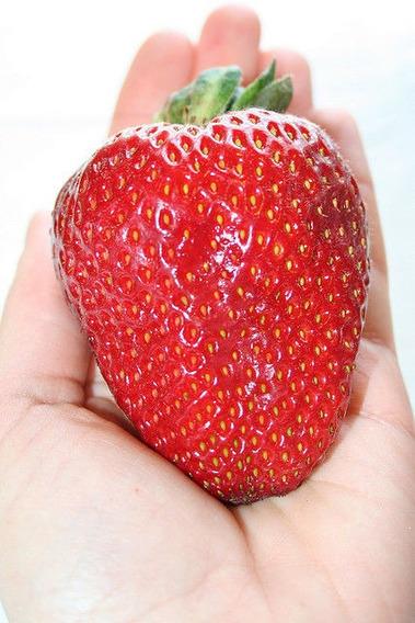 20 Sementes De Morango Gigante Frutas Fruta Para Mudas