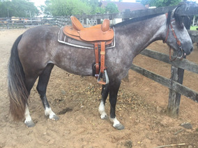 Cavalo Crioulo (égua Tordilha)