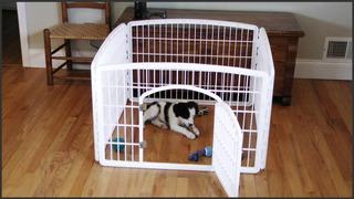 Reja Corral Plástico Reforzado Mascotas Y Puerta Env Gratis
