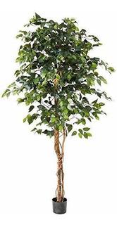 Casi Natural De 6 Pies. Ficus Arboles Artificiales, Verde