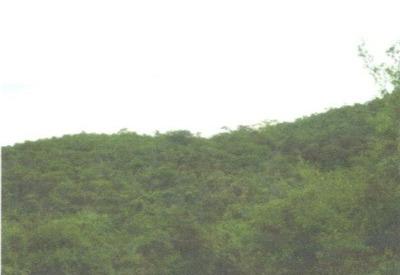 Finca En Venta Alpujarra, Tolima