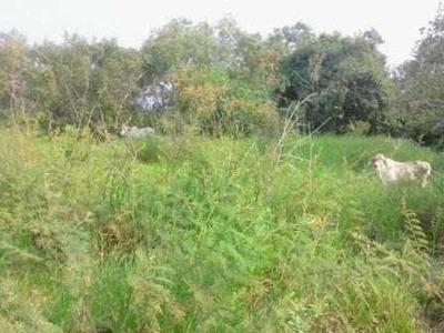 Terreno, En Una Zona Prodiga Por Su Clima Y Vegetación Jáltipan Veracruz